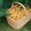 Basket with mushrooms — Stock Photo #1222076