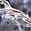 Branch covered by hoarfrost — Stock Photo #1295298