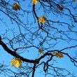 Autumn tree branch against the sky — Stock Photo