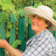 Old woman working in the garden — Foto Stock