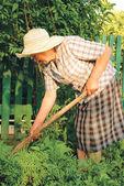Oude vrouw die werkt in de tuin — Stockfoto