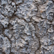Background frome cracked plaster — Stock Photo #1438328