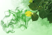 Green background with elements of flora — Stock Photo