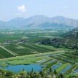 Neretva river delta in Croatia — Stock Photo