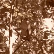 Monkey on the tree, India — Stock Photo #1464254