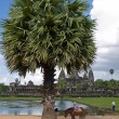 Stock Photo: Angkor wat view