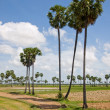 Cambodipalms — Stock Photo #1187872