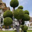 Nice tree from grand palace bangkok — Stock Photo