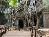 Cambodia picture — Stock Photo