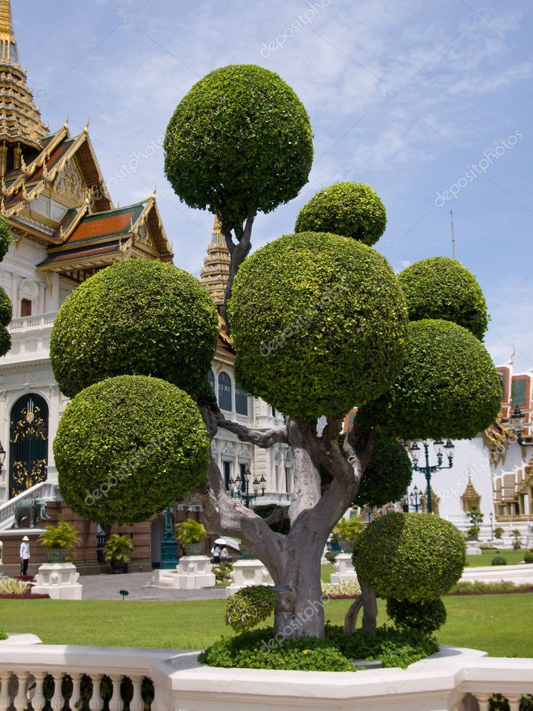 Temple tree in the Grand palace area in Bangkok, Thailand — Stock Photo #1188069