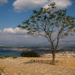 Nice greek tree — Stock Photo