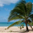 Corn Island view — Stock Photo