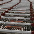 Shopping carts — Stock Photo #1421090