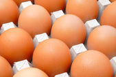 Eggs in cardboard packing — Stock Photo
