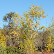 Stock Photo: Yellow leaves on autumn trees
