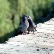 Stock Photo: Love games of pigeons on parapet