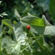 Ladybugs on a green leaf of grass — Stock Photo
