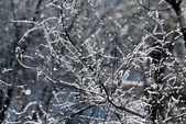 Branches covered by hoarfrost — Stock Photo