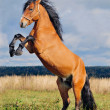 Stock Photo: Rearing stallion on autumn backgroun