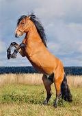 Rearing stallion on the autumn backgroun — Stock Photo