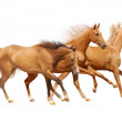 Stock Photo: Three horses on white
