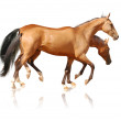 Two horses on white — Stock Photo