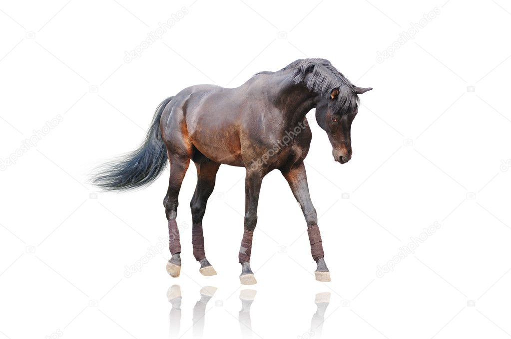 horse in action isolated — Stock Photo #2378769