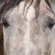 Stock Photo: Closeup of horse eye