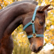 Foto Stock: Farm animal, horse