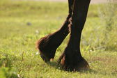 Horse hoofs — Stock Photo