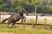 Horse jump — Stock Photo