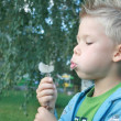The cheerful boy blowing on a dandelion. — Stock Photo