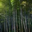 Bambushain — Stockfoto