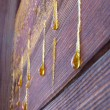 Drops of resin on old wall - Stock Photo