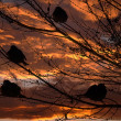 Sparrows and sunset — Stock Photo