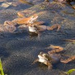 Frogs - Stockfoto