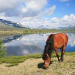 Horse near mountain lake — Stock Photo