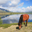 Horse near mountain lake — Stock Photo #1340848