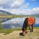 Horse near mountain lake — Stock Photo