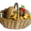Basket full of mushrooms — Stock Photo
