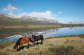 Horses near mountain lake — Stock Photo