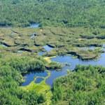 Forest-tundra landscape — Stock Photo