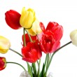 Stock Photo: Red tulip
