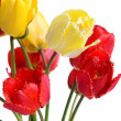 red tulip&quot — Stock Photo
