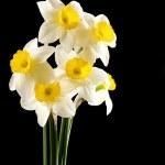 ������, ������: Narcissus