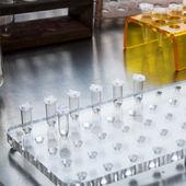 Ciencia de la microbiología — Foto de Stock