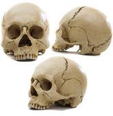 Cráneos — Foto de Stock