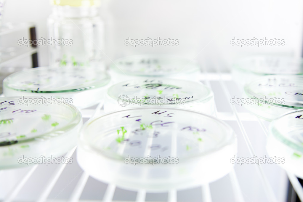 Laboratory workplace for creating modern transgenic plants — Stock Photo #2690006