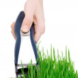 Stock Photo: Cut grass