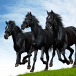 Black horses — Stock Photo